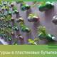 Вырастить огурцы в пластиковых бутылках – просто!