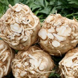 Полезные свойства и противопоказания корня сельдерея