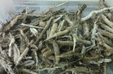 Интересные свойства корня подсолнуха
