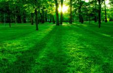 Секреты правильной посадки газонной травы