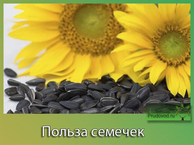 польза семечек