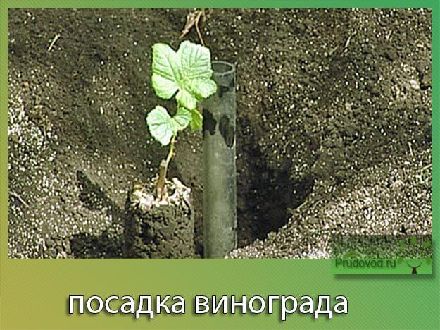 Делать фото из вконтакте