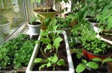 Секреты создания огорода на балконе