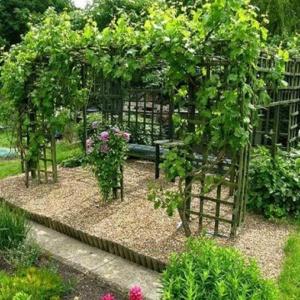 Хитрости подвязки винограда на даче