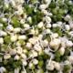 Эффективные способы проращивания фасоли