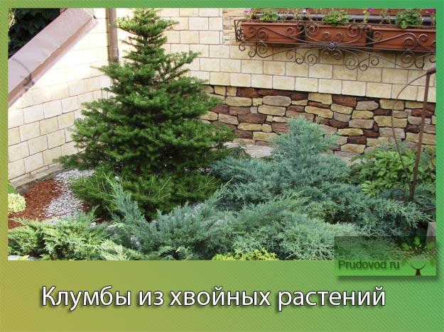 Клумбы из хвойных растений