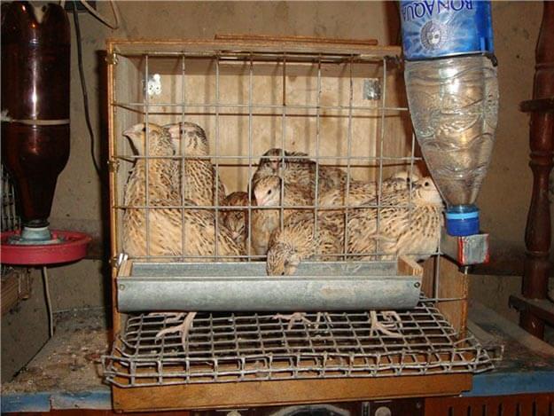 Начинки для тортов в домашних условиях рецепт с фото пошагово с