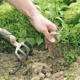 Интересные хитрости по избавлению от сорняков навсегда
