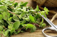 Интересно о майоране – применение в кулинарии и медицине