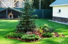 Хвойные растения на клумбе – простенько и со вкусом