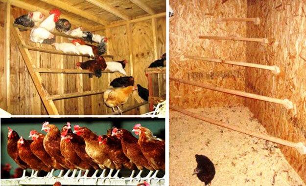 Как сделать несушки для куриц