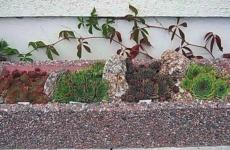 Облагораживаем цветник каменной розой