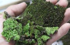 Эффективные методы борьбы с мохом на участке