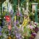 Непрерывное цветение многолетников – изюминка вашего участка