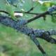 Эффективное избавление от лишайника в саду
