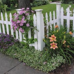 Лилейники – нежное украшение вашего цветника