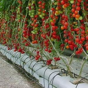 Гидропоника – осваиваем новые технологии выращивания растений