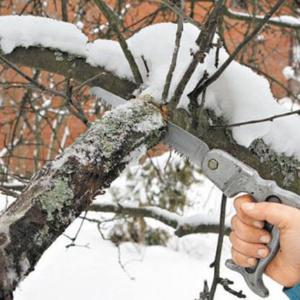 Зимний уход за деревьями – необходимость обрезки