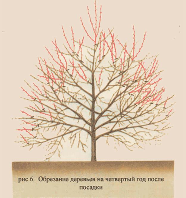 как обрезать вишню осенью Приморский край, Надеждинский