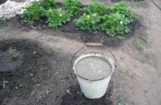 Весенняя правильная подкормка клубники – залог отличного урожая