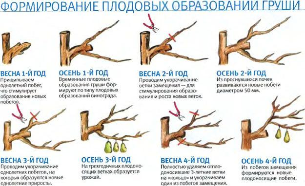 виды обрезки груш