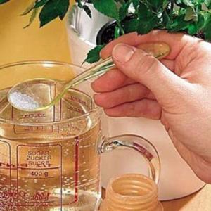 Полезные свойства и достоинства янтарной кислоты в уходе за комнатными любимцами