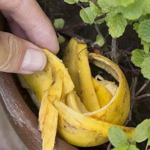 Внесение органических подкормок – непременное требование для хорошего роста растений