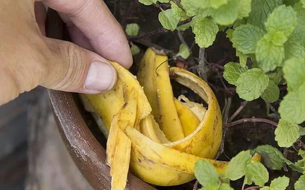Подкормка для цветов бананы
