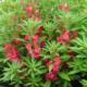 Превращаем выращивание бальзамина садового в увлекательное занятие