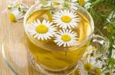 Скромные ромашки – кладезь полезных веществ