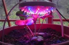 Светодиодные лампы для растений – как выбрать и правильно применить