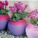 Цикламен – немного секретов выращивания капризного красавца