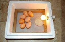 Делаем инкубатор – неплохую альтернативу покупному агрегату