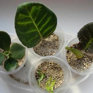 Вермикулит – функции вещества в выращивании растений